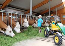 Urlaub auf dem Bio-Bauernhof, Bauernhof Brandlhof Ramsau